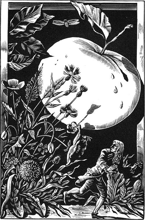 В отместку злой шут, улучив момент, когда я проходил под одной из яблонь, встряхнул её прямо над моей головой, вследствие чего дюжина яблок, величиной с бристольский бочонок каждое, посыпались вокруг меня...